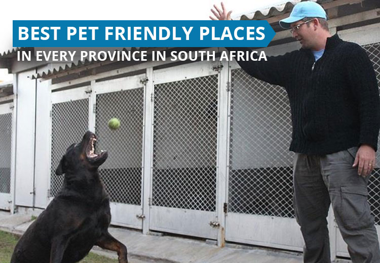 Best Pet Friendly Places in Every Province in South Africa