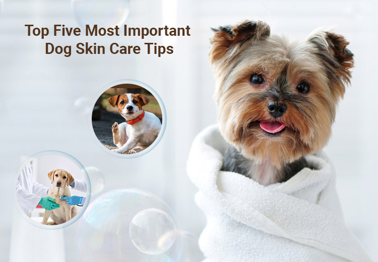 Top Five Most Important Dog Skin Care Tips