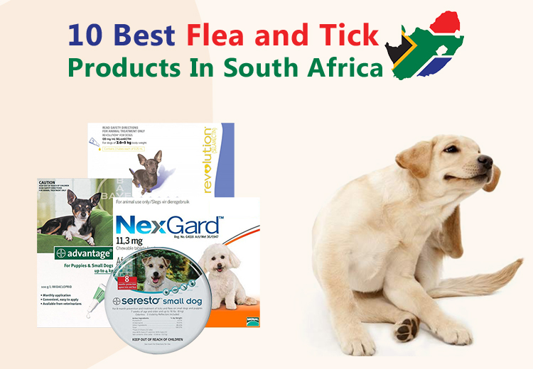 10 Best Flea and Tick Products In South Africa