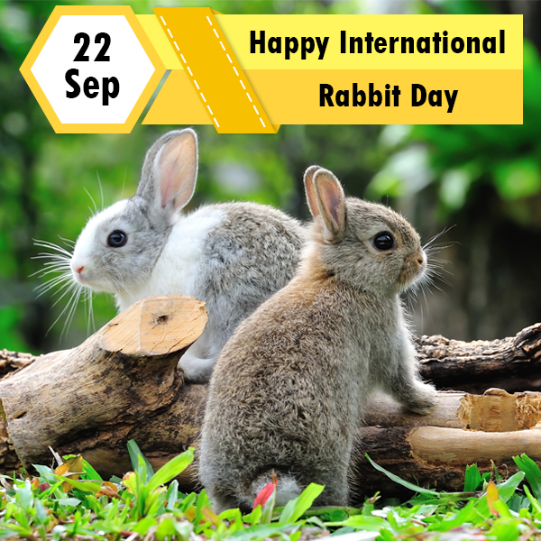 UNILAD - International Rabbit Day   Facebook