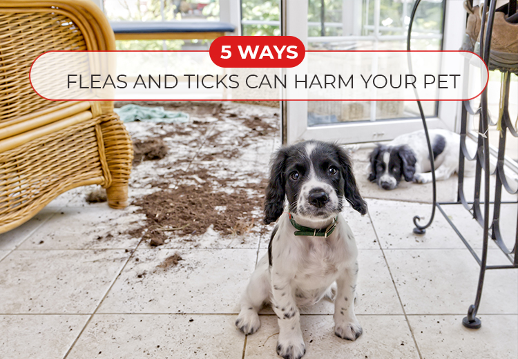 5 Ways Fleas and Ticks Can Harm Your Pet