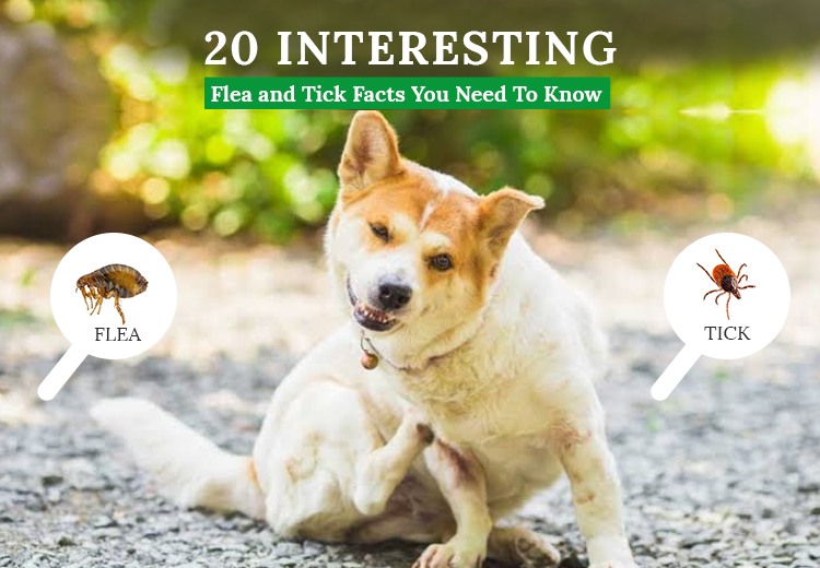 20 Interesting Flea and Tick Facts You Need To Know