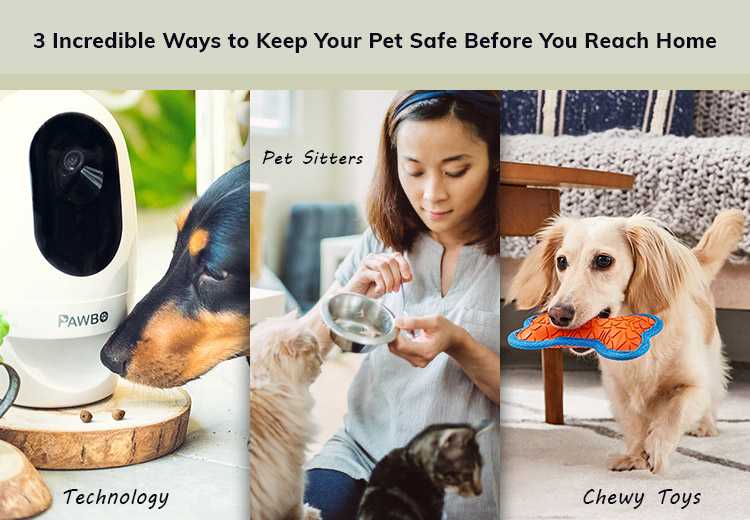 Incredible Ways to Keep Your Pet Safe Before You Reach Home