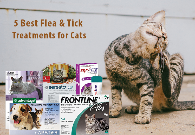 Top 5 Vet-recommended Flea Treatments For Cats