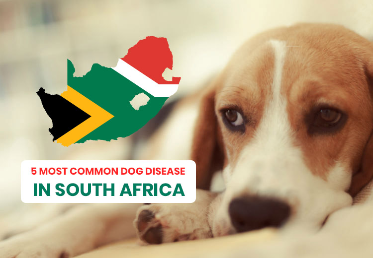 5 MOST COMMON DOG DISEASE IN SOUTH AFRICA