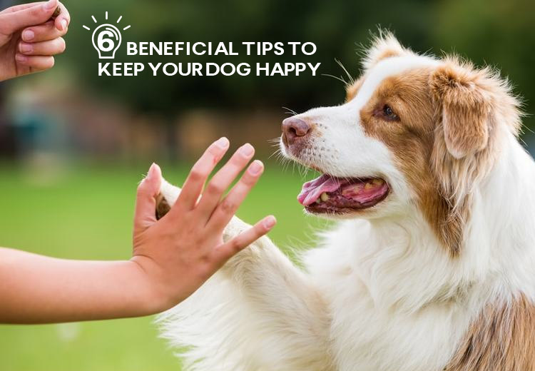 6 Beneficial Tips to Keep Your Dog Happy