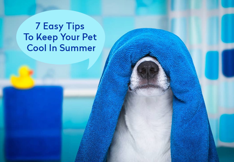 7 Easy Tips To Keep Your Pet Cool In Summer