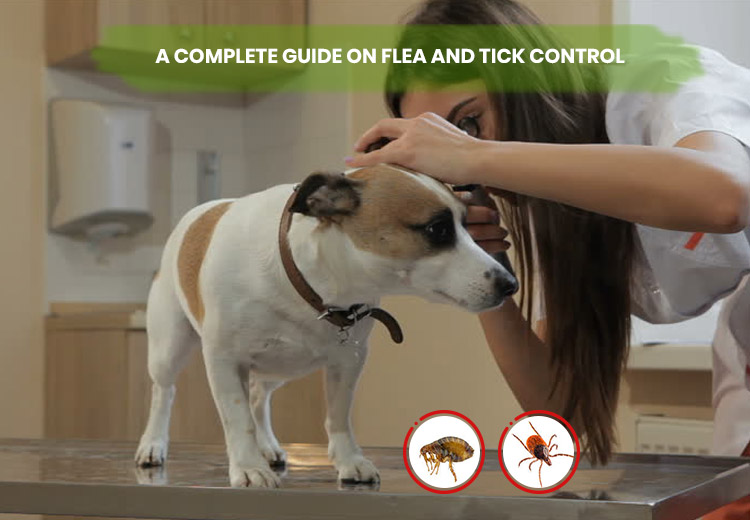 A COMPLETE GUIDE ON FLEA AND TICK CONTROL