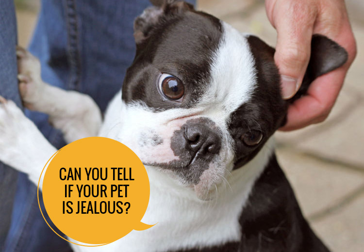 Can You Tell If Your Pet Is Jealous?