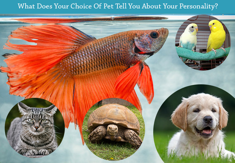 What Does Your Choice Of Pet Tell You About Your Personality?