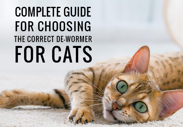 Complete Guide for Choosing The Correct De-wormer For Cats