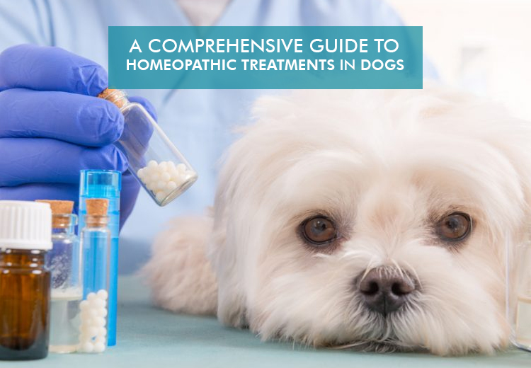 Comprehensive Guide For Homeopathic Treatments in Dogs