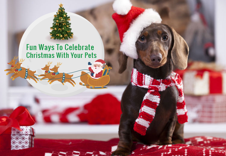 Fun Ways To Celebrate Christmas With Your Pets
