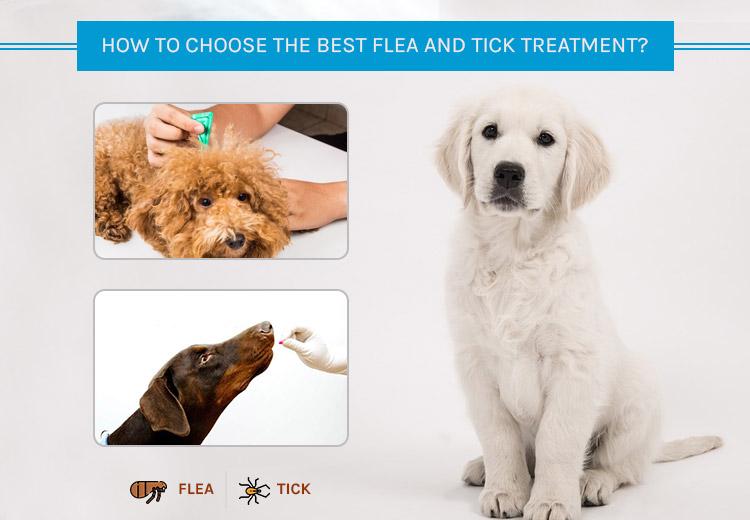 tick choose flea treatment
