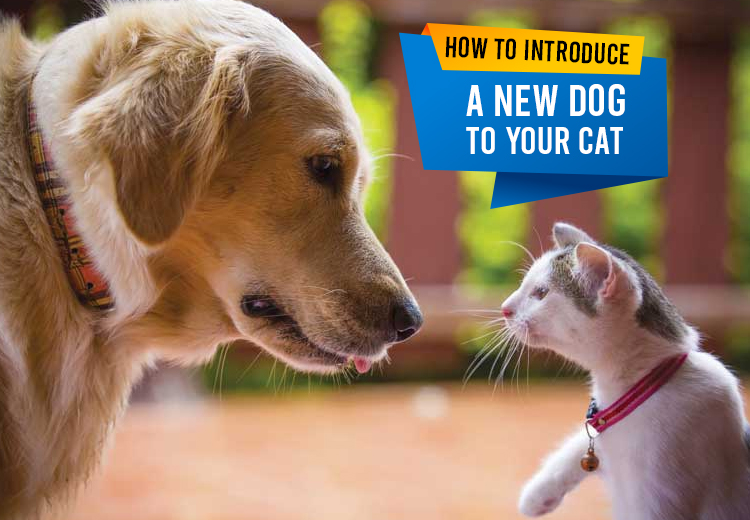 Things to know before introducing your cat to a new dog in a same home