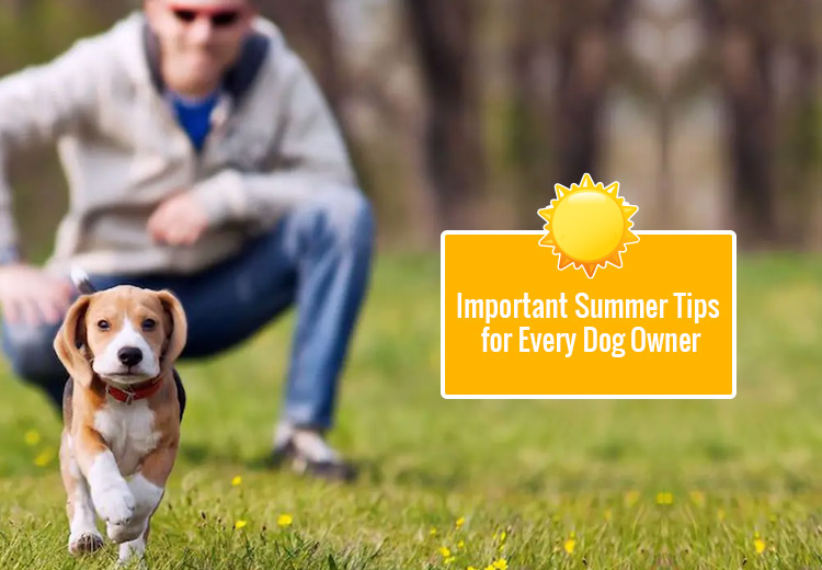 Important Summer Tips for Every Dog Owner