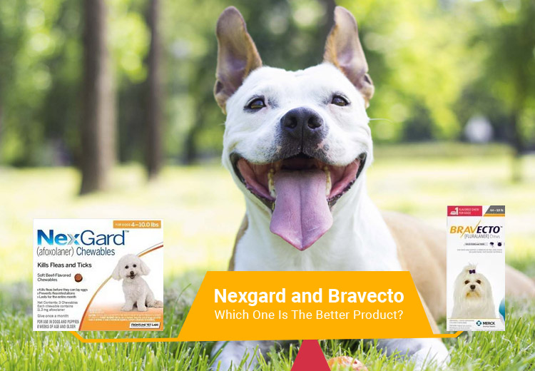 Nexgard and Bravecto: Which One Is The Better Product?