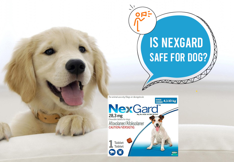 Is Nexgard Safe For Dogs?