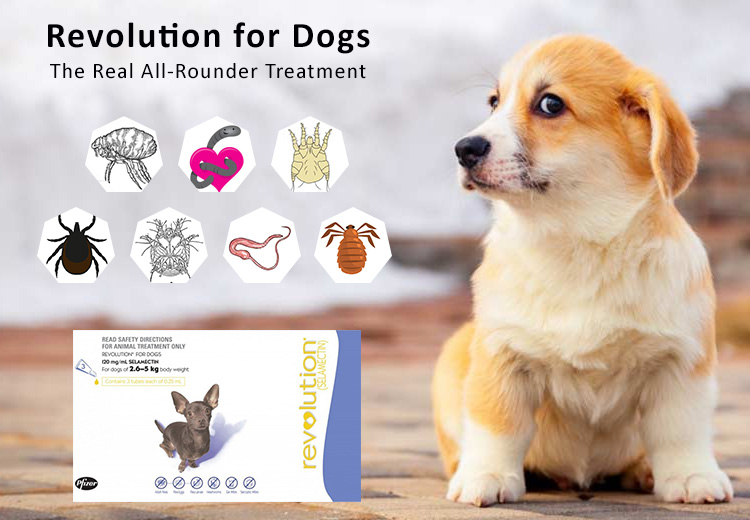 Revolution for Dogs: The Real All-Rounder Treatment