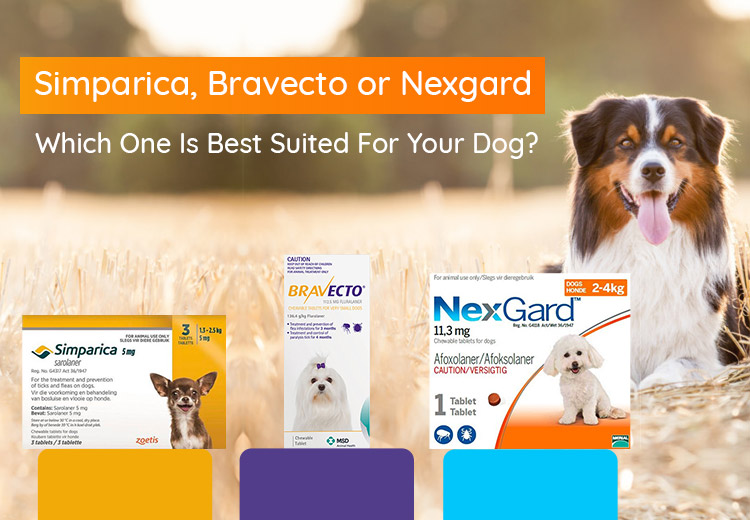 Simparica vs Bravecto vs Nexgard