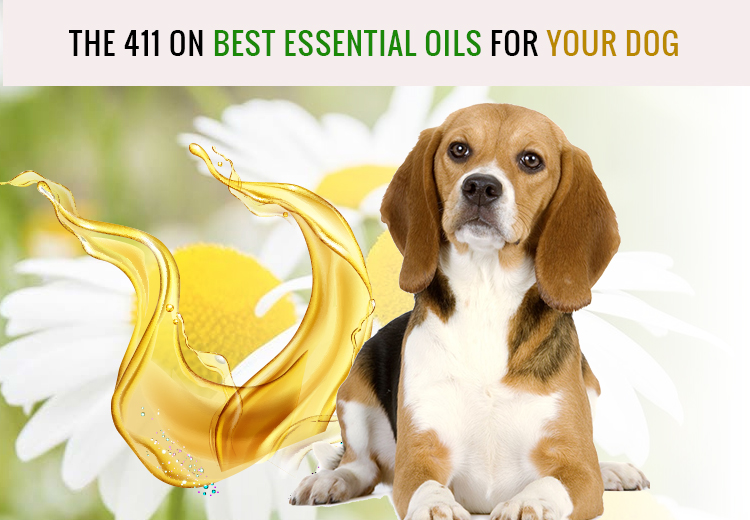 The 411 On Best Essential Oils For Dogs