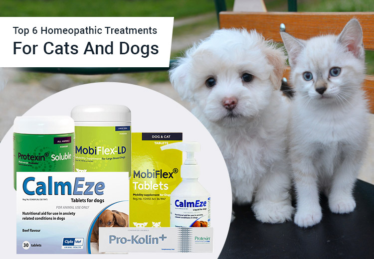 Best Homeopathic treatment For Dogs and Cats