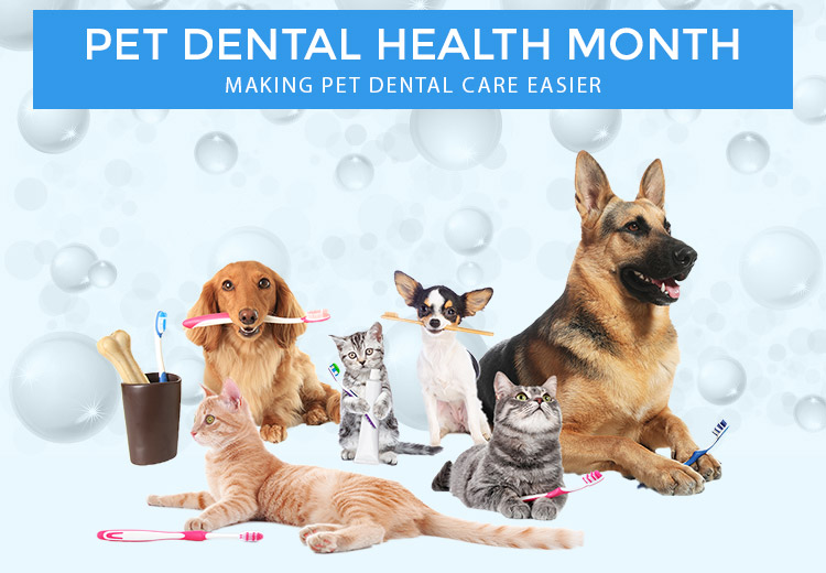 Top 6 Dental Products to Stock This Pet Dental Health Month