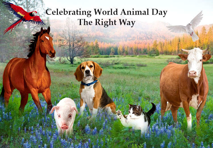 Celebrating World Animal Day The Right Way