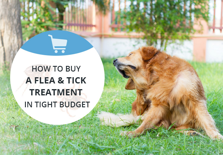How to Buy a Flea and Tick Treatment in Tight Budget