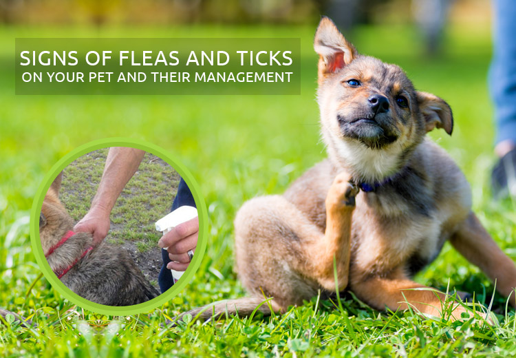 Signs of Fleas and Ticks on Your Pet and Their Management